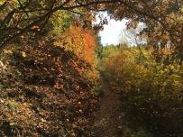 camminando in messo al bosco